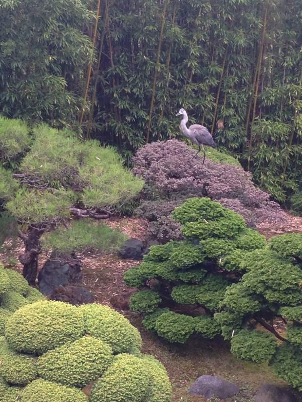 tea-garden-2