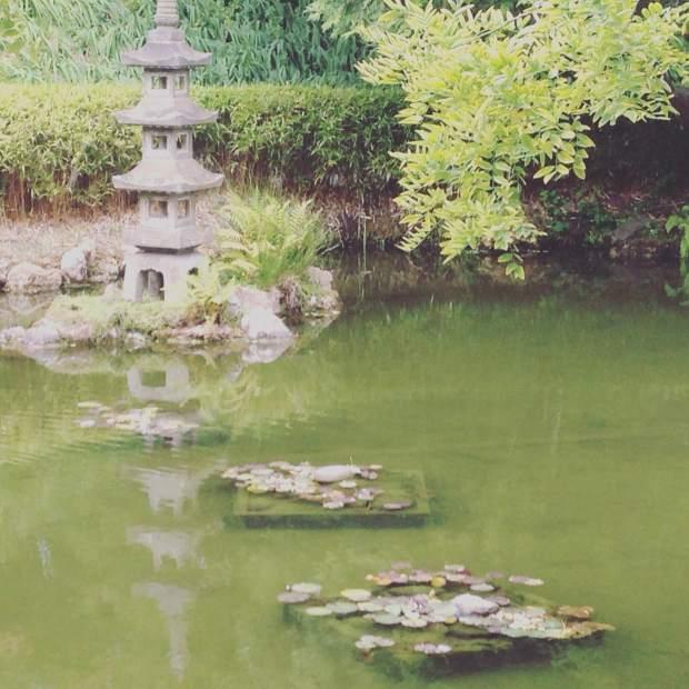 tea-garden-5